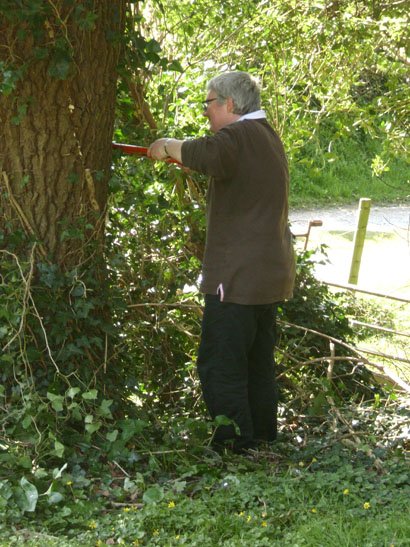 Our treasurer Cairen Stedman doing a fine job in removing ivy from the trees in the Churchyard....