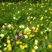 Flowers in Billingsley churchyard